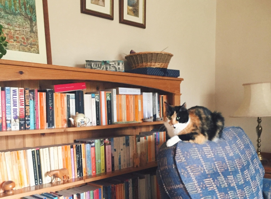 calico-cat-bookshelf-vintage-interiors