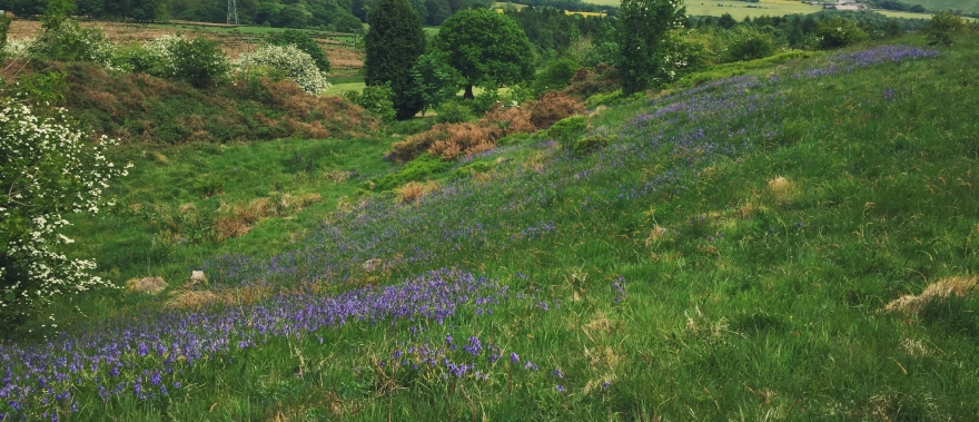 countryside-bolton-green-bluebells-ruby-newby