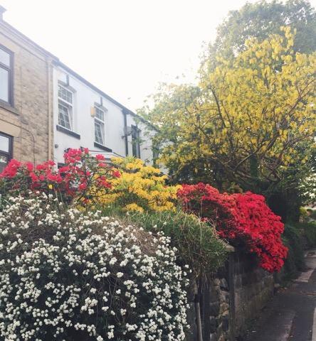 pink-red-yellow-white-flowers-summer-front-garden.jpg