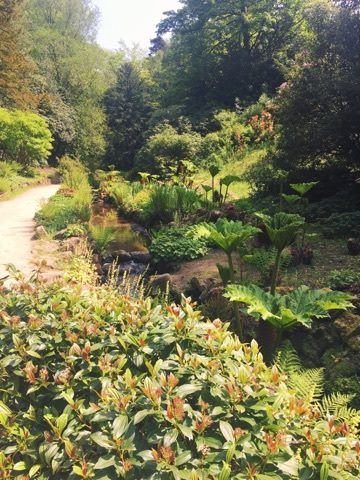 summer-pretty-national-trust-stream-gardens